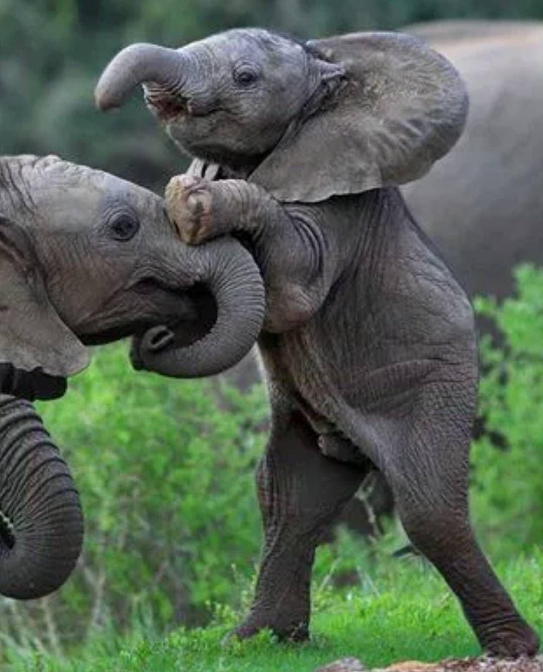 Картинки, смешные слоники картинки