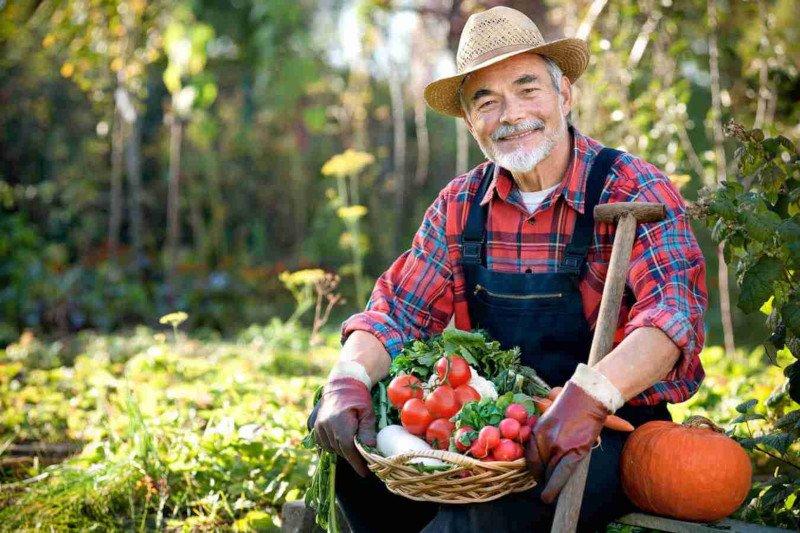 День повара, картинки с огородниками