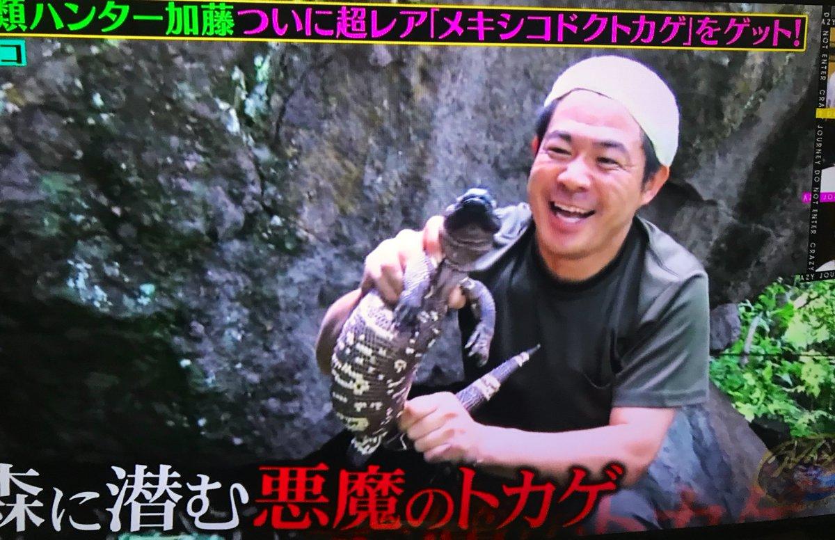 クレイジー ジャーニー 爬虫類 ハンター