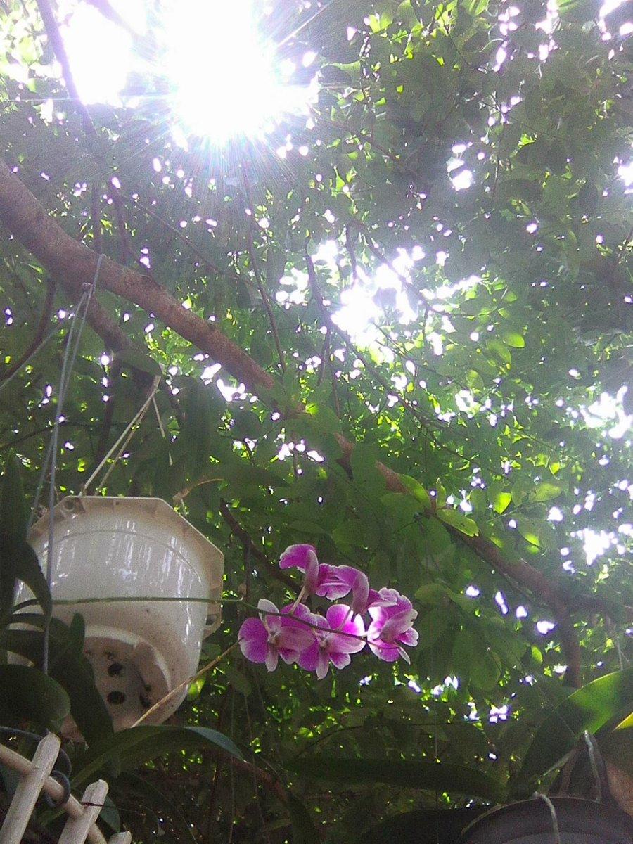 Tú Nguyễn on Twitter: Under sunlight... #myphoto…