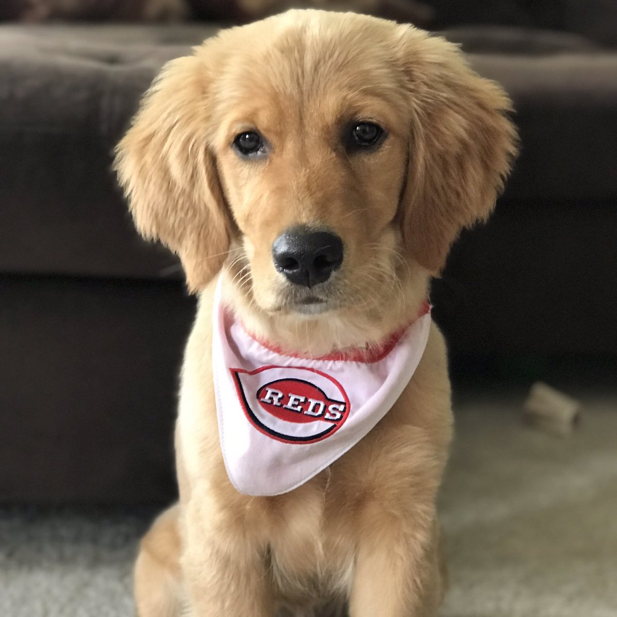The game is over. Please enjoy this picture of the social media intern's puppy.
