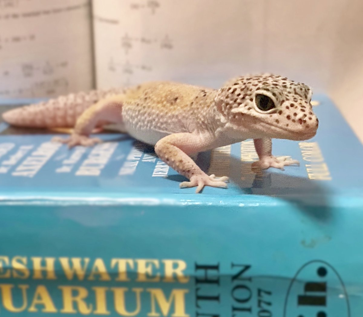 It's #WorldLizardDay and #BacktoSchool for Broward County! Leo our Leopard Gecko celebrated by hitting the books.  <br>http://pic.twitter.com/0tYr2DPEmU