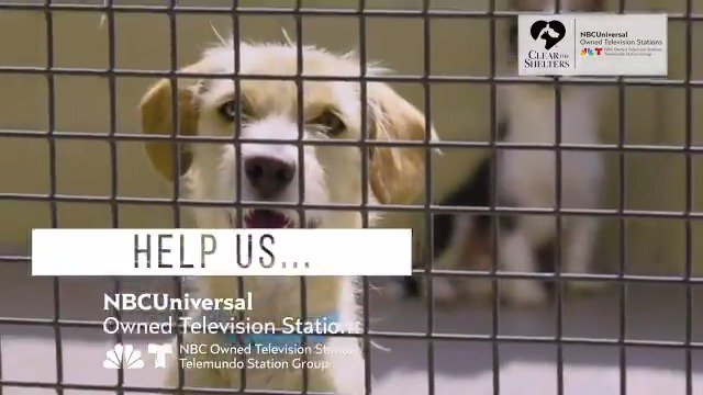 The 5th annual #ClearTheShelters nationwide pet adoption campaign is back! Find your new furry best friend today! Visit cleartheshelters.com for more information.