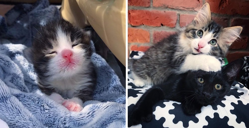 2 kittens who were rescued from the same fate, are so happy when they find each other. See full story and updates: lovemeow.com/kittens-rescue…