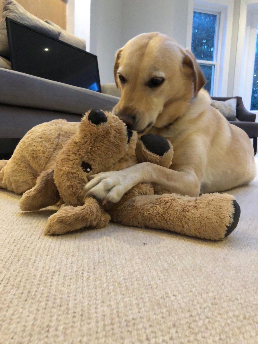 Thought Ed liked his new puppy toy but then he didn't & then he did but I'm pretty sure he does now!!!