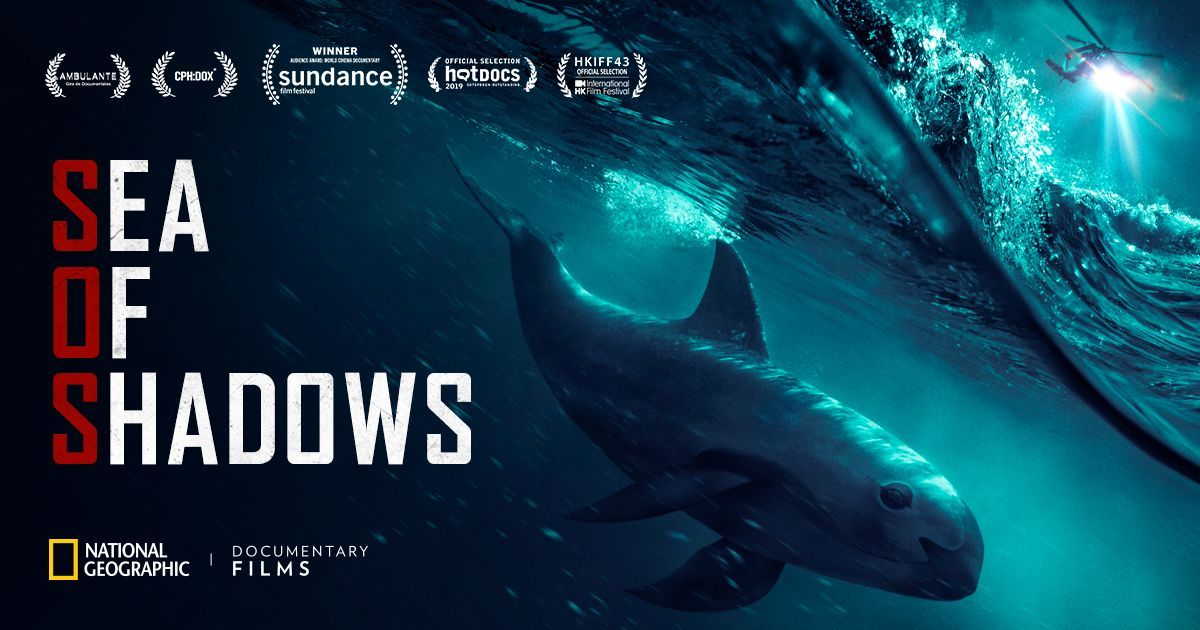 Sante Fe, Baltimore, and Salem get ready for the premiere of the documentary of the summer, @natgeo's #SeaofShadows! With less than 15 #vaquitas left in the , it's time to save them is NOW or Never because #ExtinctionIsForever. Visit  https:// buff.ly/2KiPIIs      for tickets.<br>http://pic.twitter.com/ZXzkiuF8xE
