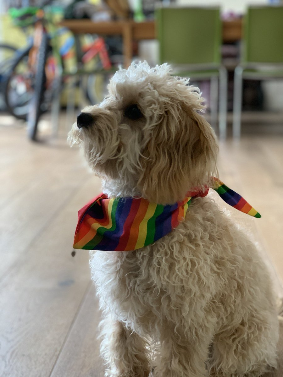 Even the dog is ready for #BrightonPride2019. Lets go!!