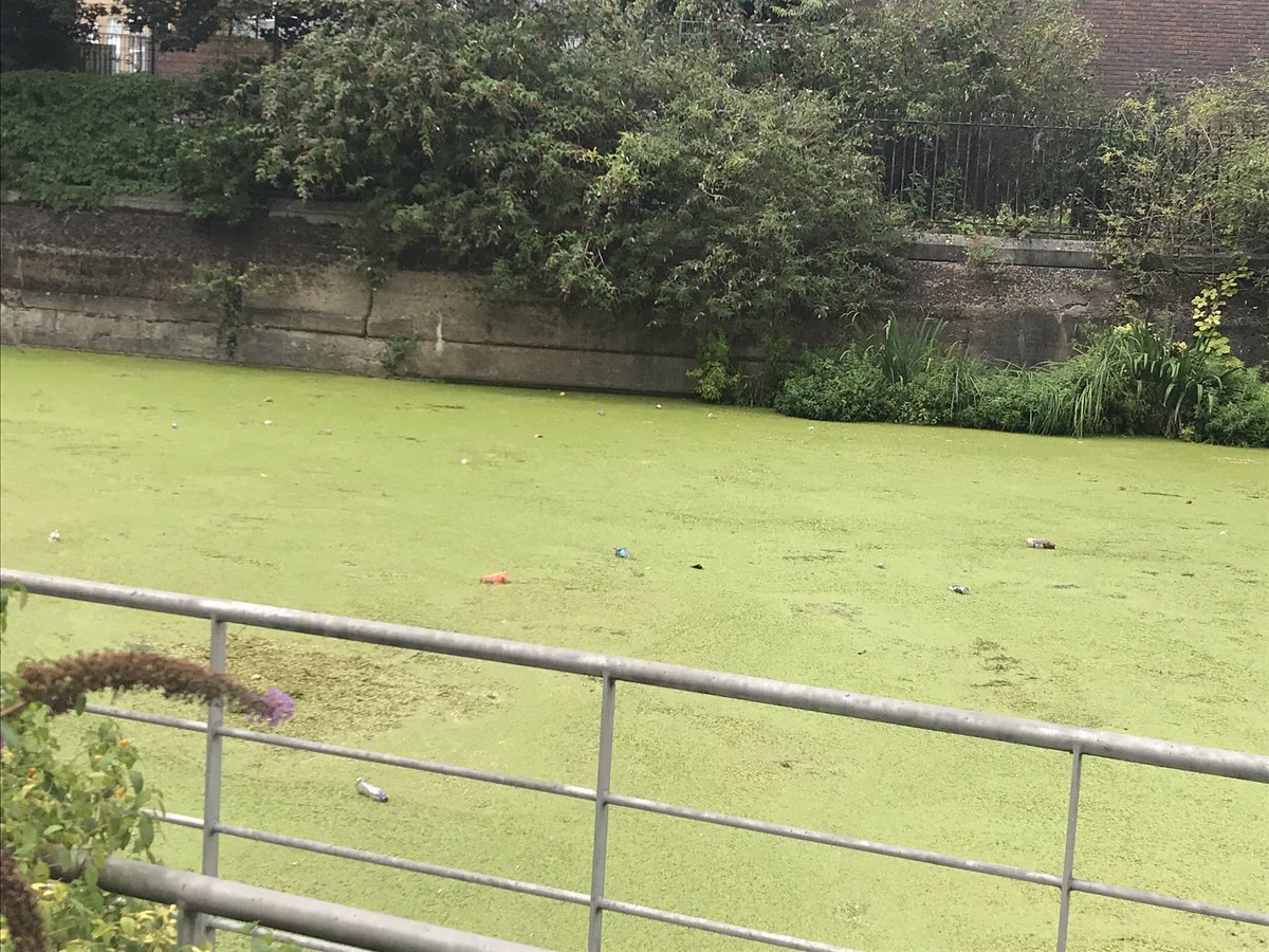 EBDJcKtXsAEPNjE - The canals' duckweed war