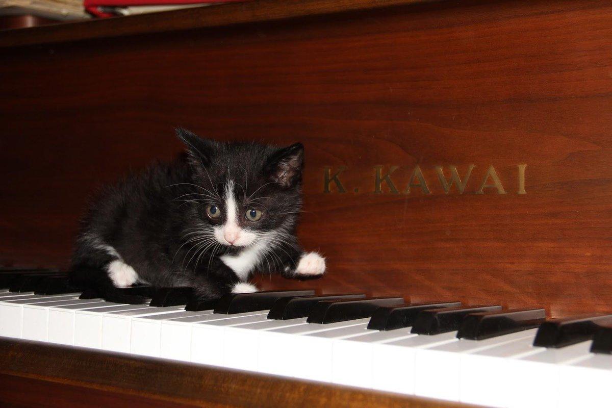 Kawai Pianos USA (@KawaiPianos) | Twitter