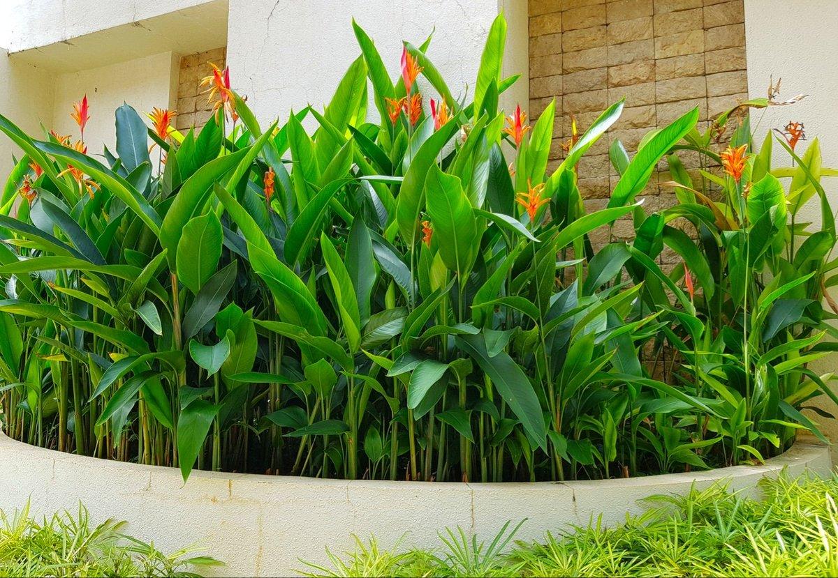 Dream Yard Team On Twitter Corner Raised Bed With Paradise Flower Strelitzia Flowergarden Garden Tropicalflowers Raisedgardenbed Landscaping Https T Co Judszsdrcr