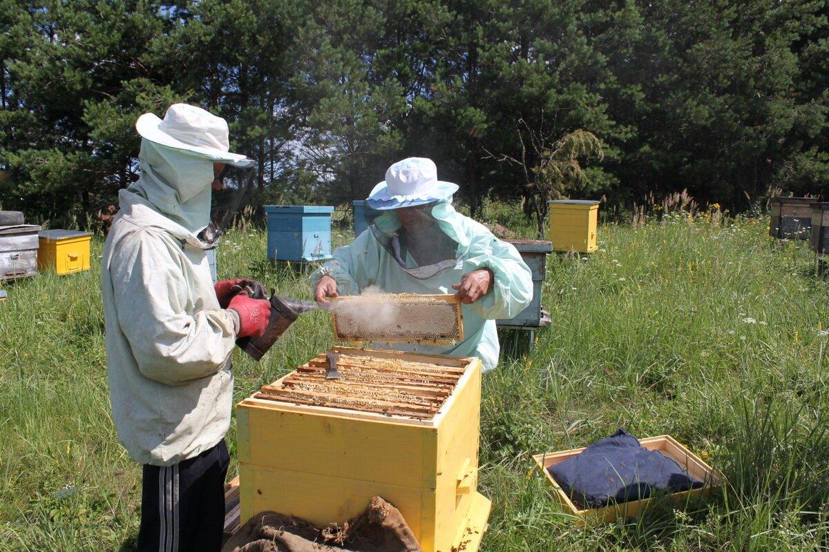 уважаемые пчеловоды картинки давно стало