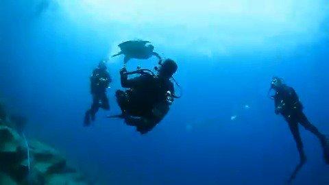 🇪🇸🐬 VOX se sumerge para defender la España submarina. ⛵ @Ortega_Smith nos enseña el maravilloso tesoro natural que hay en nuestros mares: