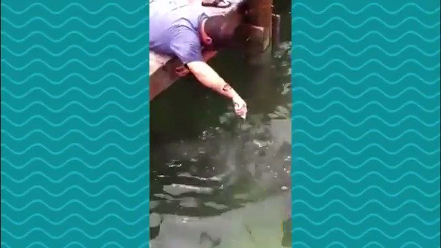 Your weekly @RonMagill Play-by-Play Video: This fisherman has quite the fish tale to tell. -Lorenzo