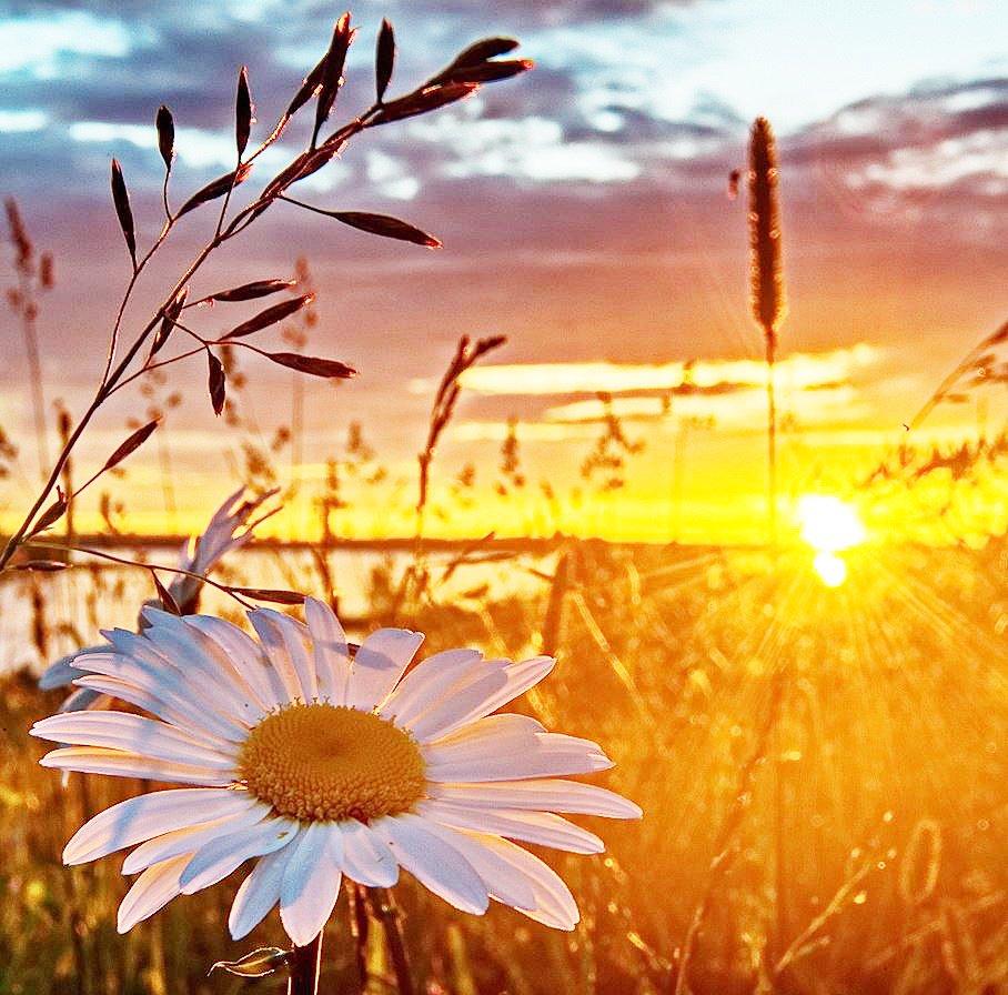 Доброе утро лето рассвет цветы солнце красивые картинки, прикольных козочек видео