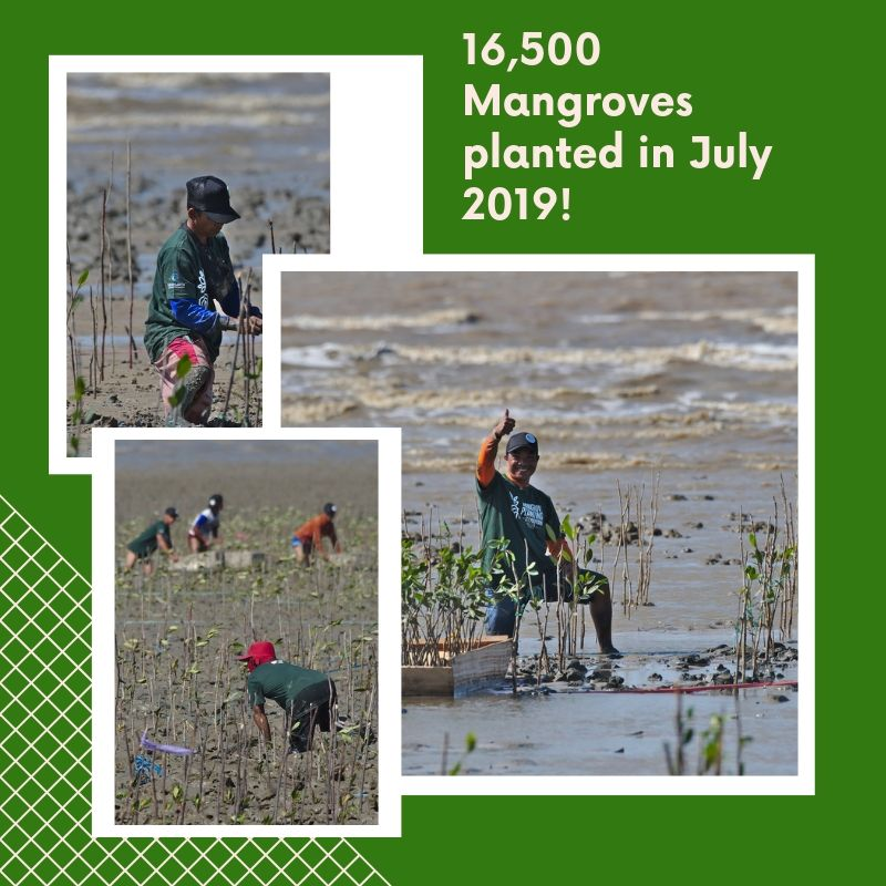 16,500 new mangroves have a new home! As you can imagine, it wasn't easy planting them, but the long-term benefits make the challenge worth it!  #BlueCarbon #MangrovePlanting #MarineBiodiversity #Mangroves #Conservation #CommunityEffort #CommunityIncome #BeTheChange