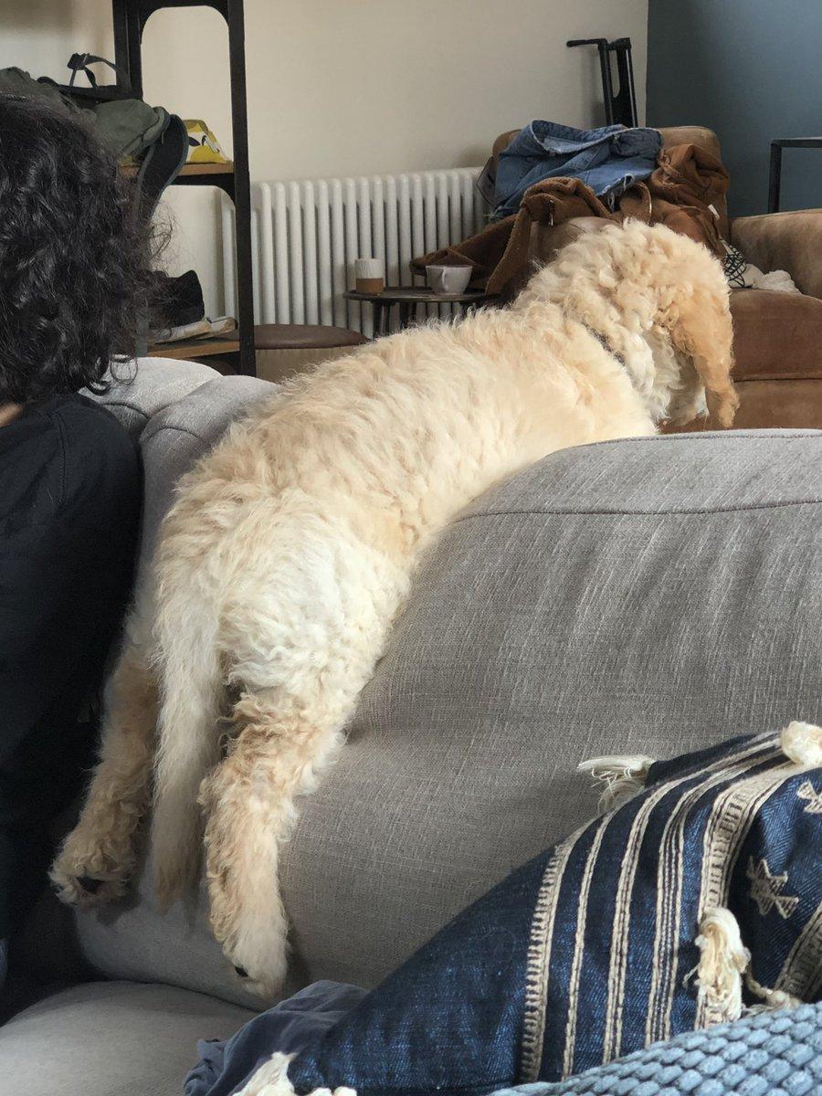 Mumbo Jumbo On Twitter This Is How Kubo Sits On The Sofa