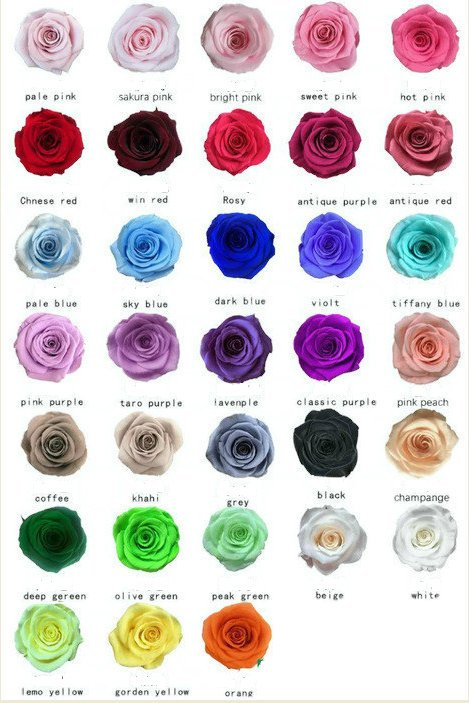 Preserved roses large 24.99, 6 pack  https:// etsy.me/2T7PWGl     #housewares #homedecor #anniversary #foreverflowers #foreverroses #weddingrose #preservedflower #preservedredrose #wholesaleroseheads #floralsupplies #craftsupplies<br>http://pic.twitter.com/xHlYYbPMxN