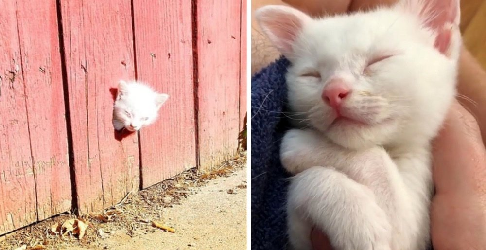 Rescuers found a kitten through a fence and the kitty was not alone. See full story: lovemeow.com/rescuer-found-…