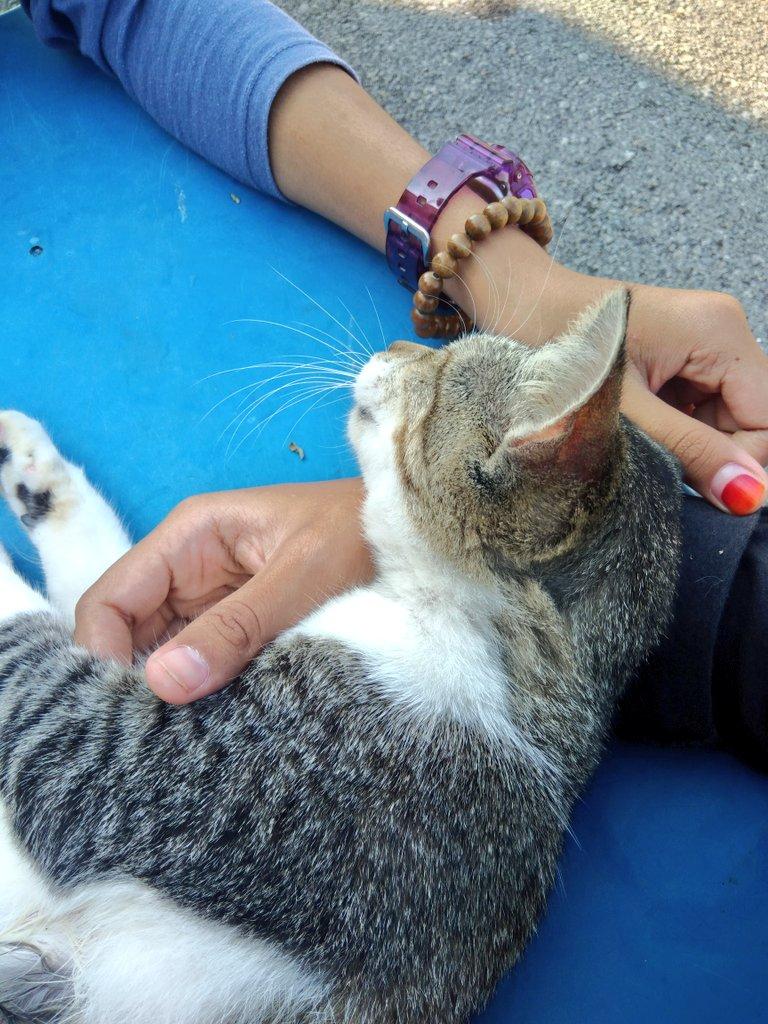 Download 100+  Gambar Kucing Oren Putih Paling Baru