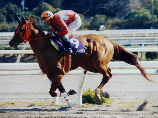 ~懐かしの名馬~  懐かしい高知の名馬の写真がでてきました♪  2003年3月21日に高知競馬場で撮影したエイシンドーサンと徳留康豊騎手です。  (高知での重賞勝ち)  2001年  珊瑚冠賞  2002年 建依別賞  #高知競馬 #懐かしの名馬 #黒船賞