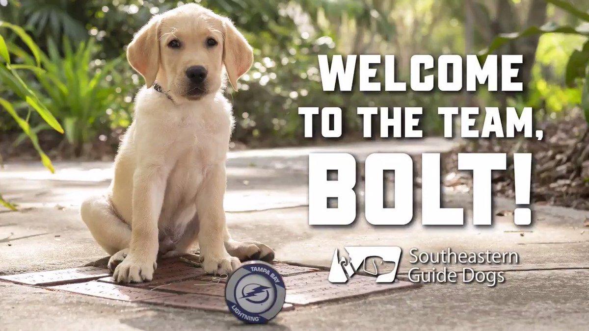 Hi, #Bolts fans! Meet Bolt. 🐶 🐾 tbl.co/bolt8-6