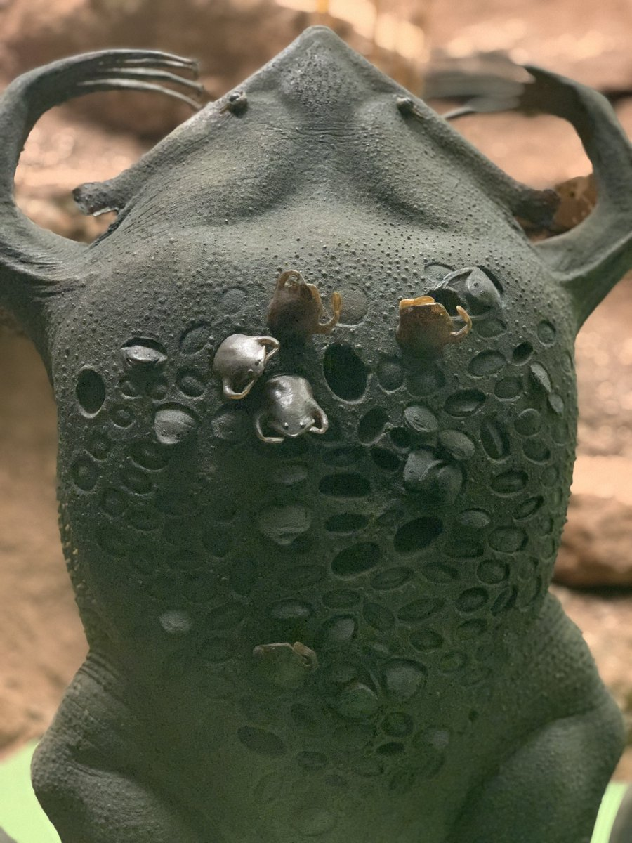 American Museum Of Natural History On Twitter A Suriname Toad
