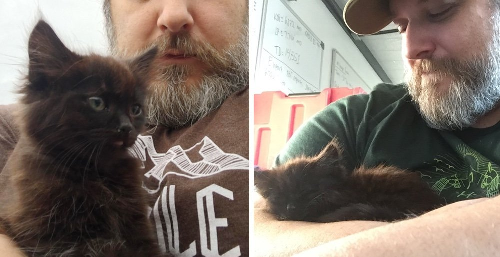 Kitten raced to a geologist, climbed onto his shoulders and wouldnt let go. See full story and updates: lovemeow.com/kitten-geologi…
