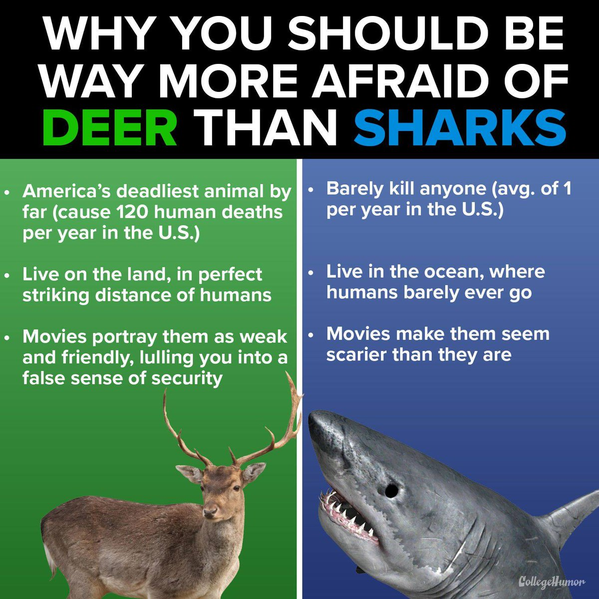 DEER FEAR!  10 persons die by deer in 2017 (Germany). Caused by sharks: same number, but worldwide!  Man kills about 100 million sharks each year. No known statistics for deer. Don't fear sharks!  Meme by http://bit.ly/2JBjZSt  #SharkProtection pic.twitter.com/M22CrYoeOM
