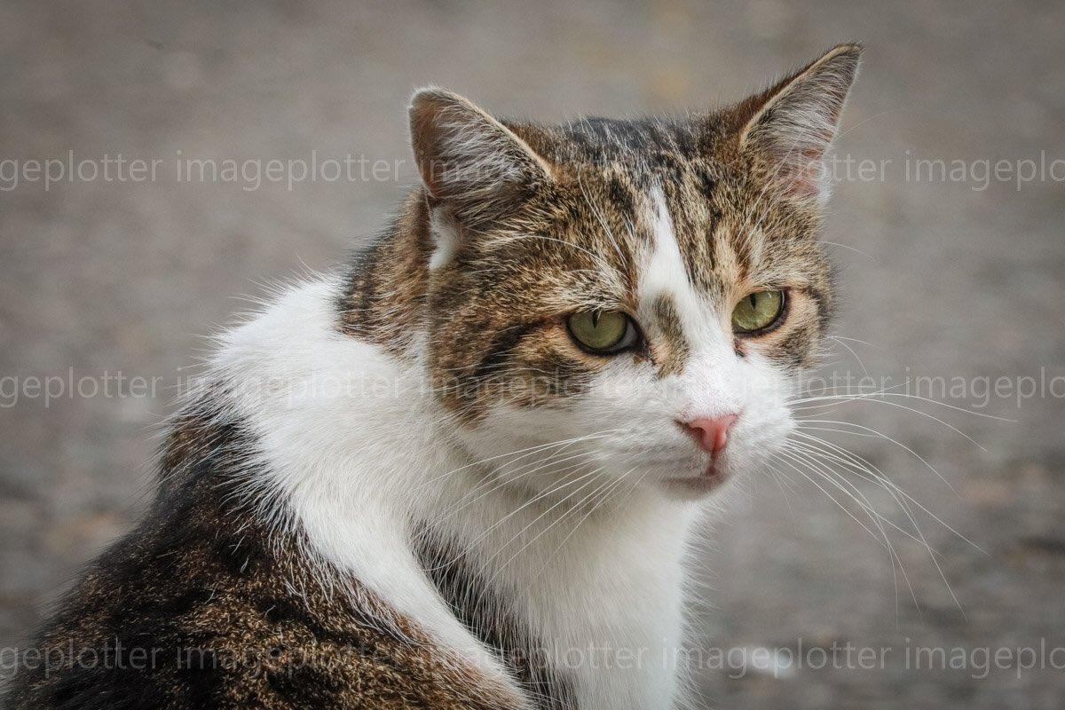 Larry the Cat, Esq  (@Number10cat) | Twitter