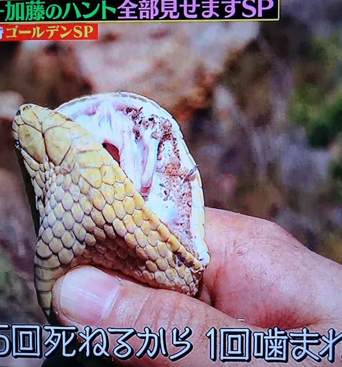 ハンター 爬虫類 クレイジー ジャーニー