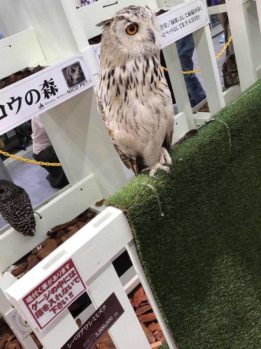ホームセンター ムサシ 久喜 菖蒲 店