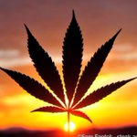 Image for the Tweet beginning: Marijuana traffic deaths in Nevada
