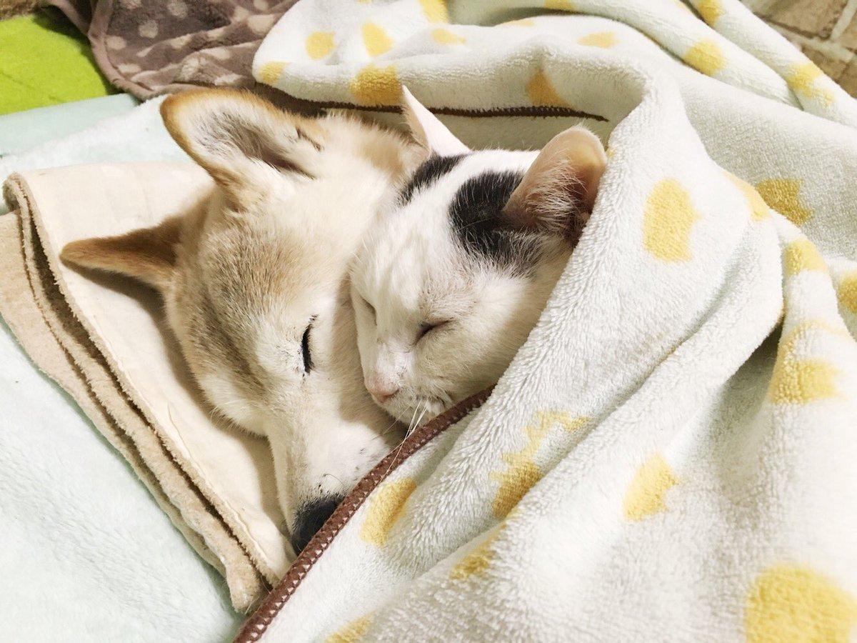 Картинки с собакой и котенком спокойной ночи
