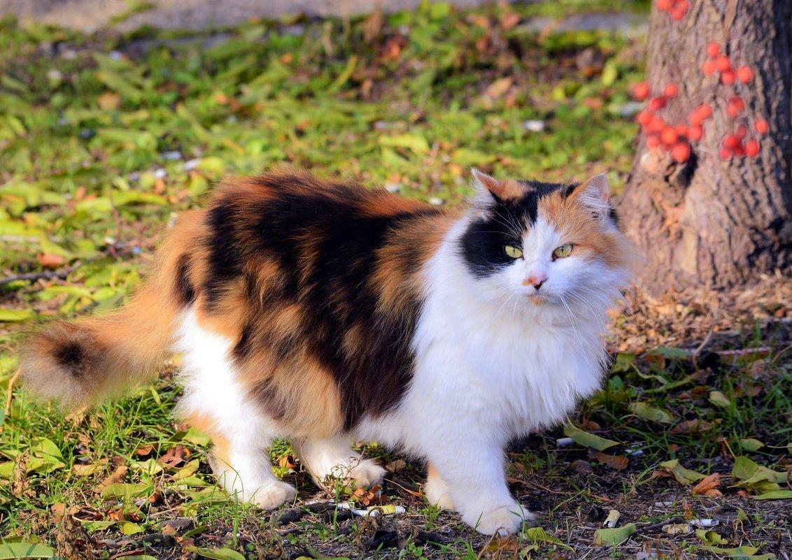 Самые смешные кошки в мире фото хлопковый