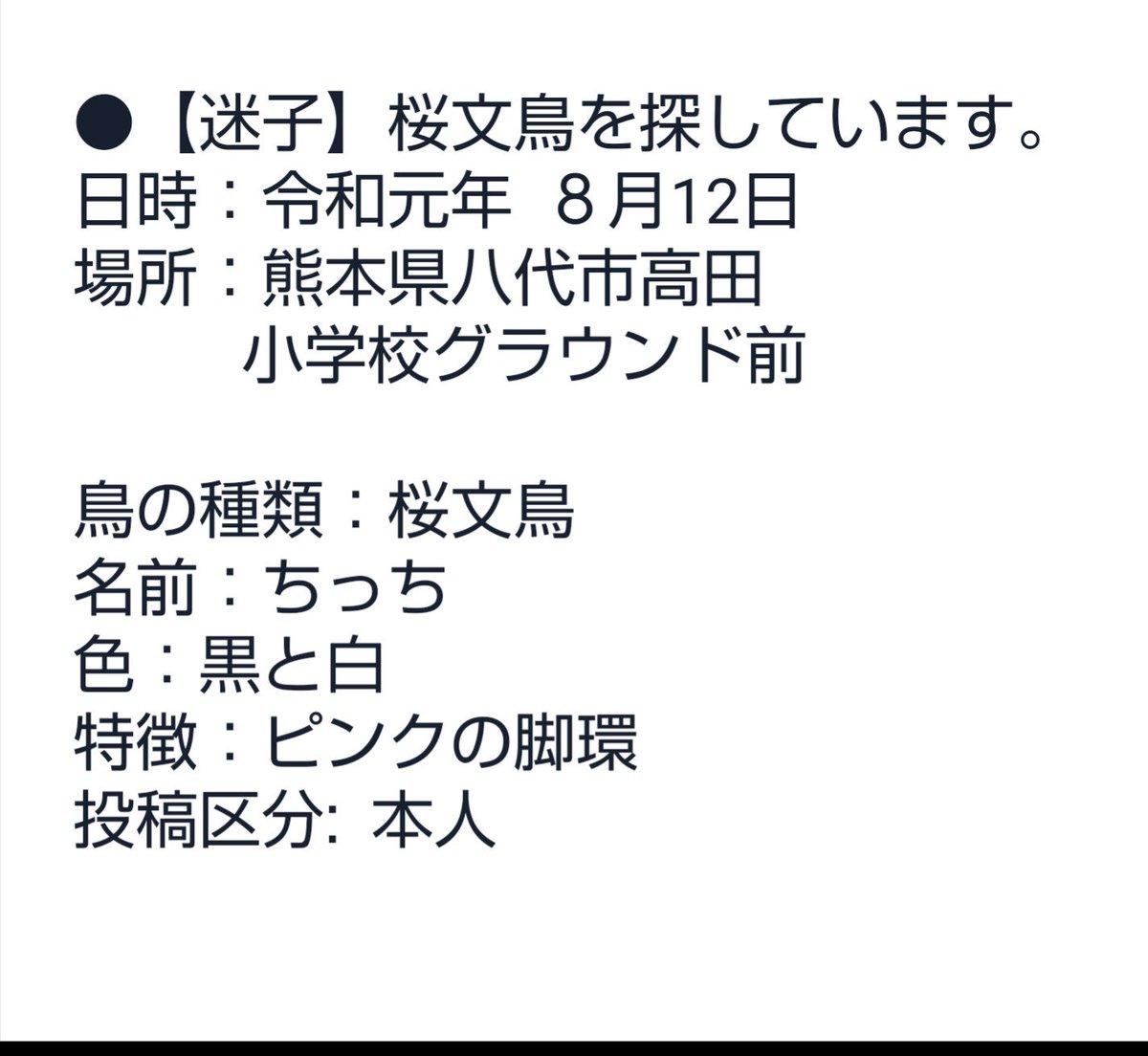 知り合いからの以来です。 拡散お願いいたします。 天気も悪く お願いいたします。 #迷子 #文鳥 #熊本 #拡散希望
