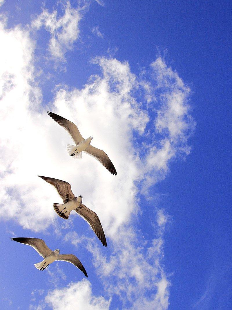 День, поздравления в небе картинки