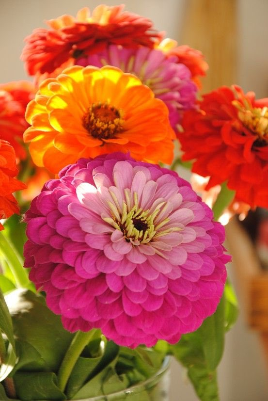 @snowleopard56 @FlowerSree @FlowerchildRT @encarnacion67 @gamila2103 have a beautiful day 🤗💕❤️🧡💛