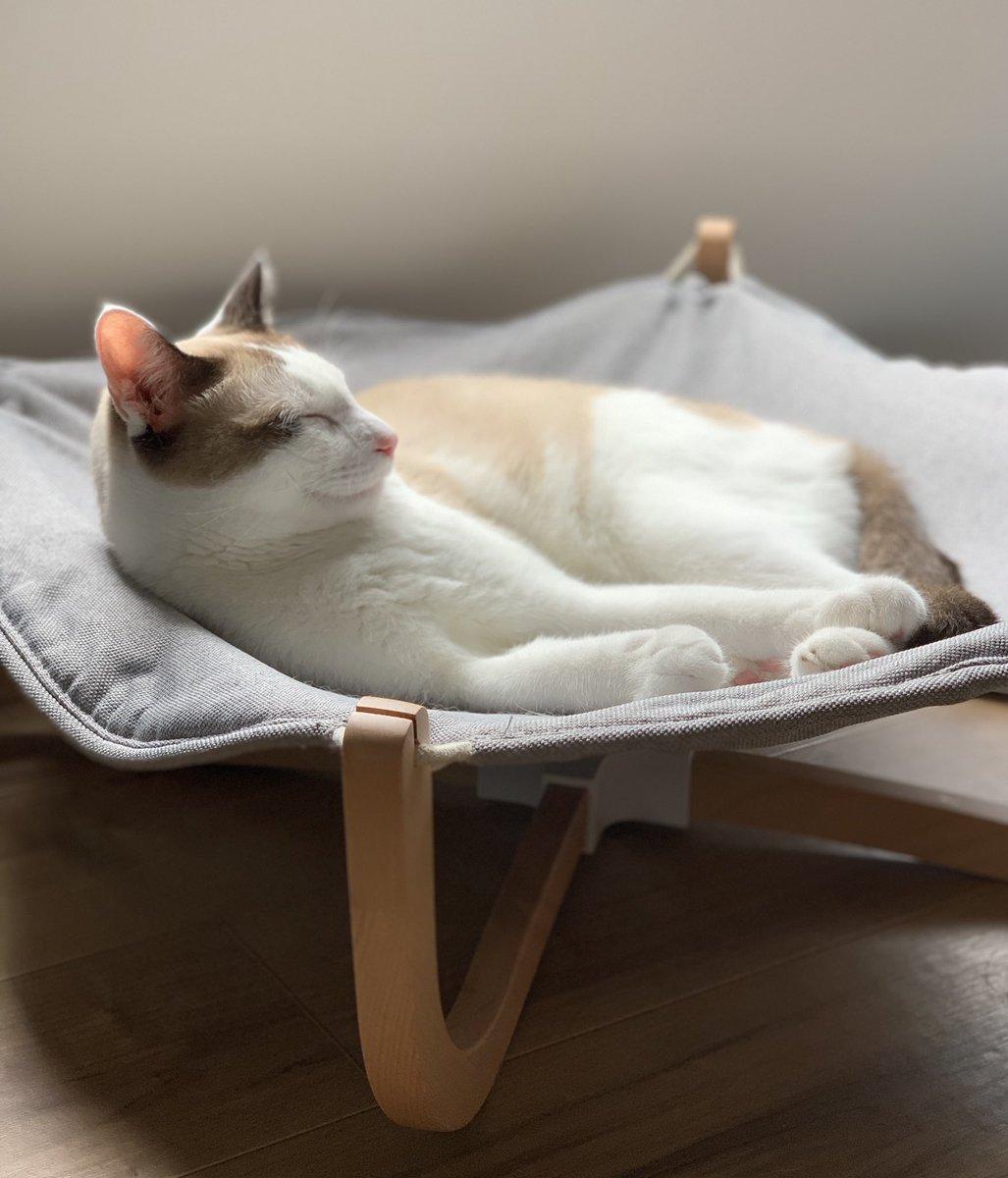 猫用に買ったものを正しく猫が使っていると、「勝訴」の紙を掲げて走り回りたい気持ちになる