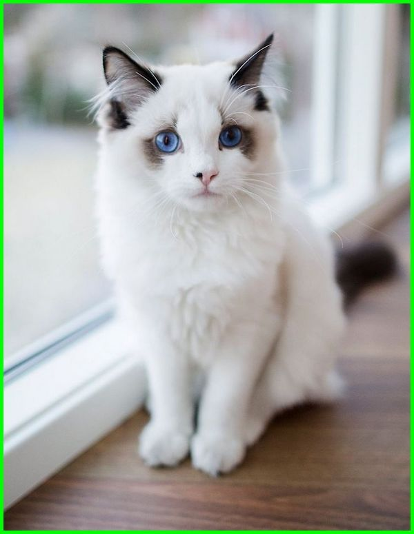 Green Planet On Twitter I Appreciate All Cat Lovers This Day