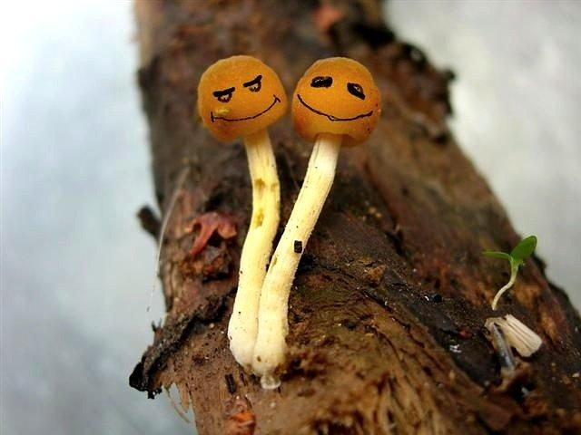 Открытки, картинки грибов смешных