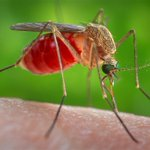 Image for the Tweet beginning: Arboviral diseases (think #WestNileVirus and