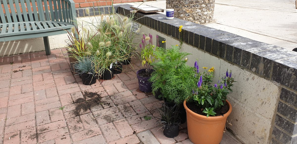 Thank you to Homebase Chichester and @MNursery for donating plants for our Supporters Day on 17th Aug. If you have any to donate we would really appreciate it. 🌿⚘🥀🌺🌻🌼🌸🌾 https://t.co/kSISV41izM