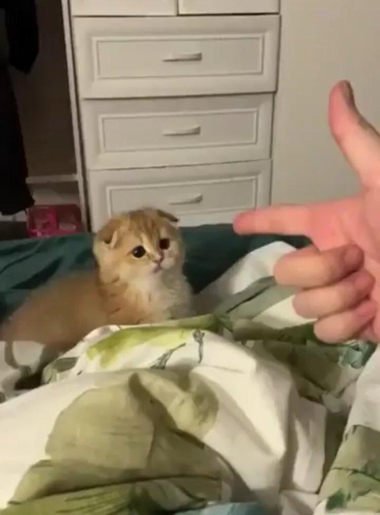 飼い主「手あげろ!!!」  猫「ばっ!!」  飼い主「可愛い!!!許す!!!」
