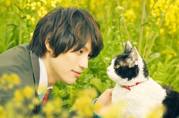 映画『旅猫リポート』高畑充希