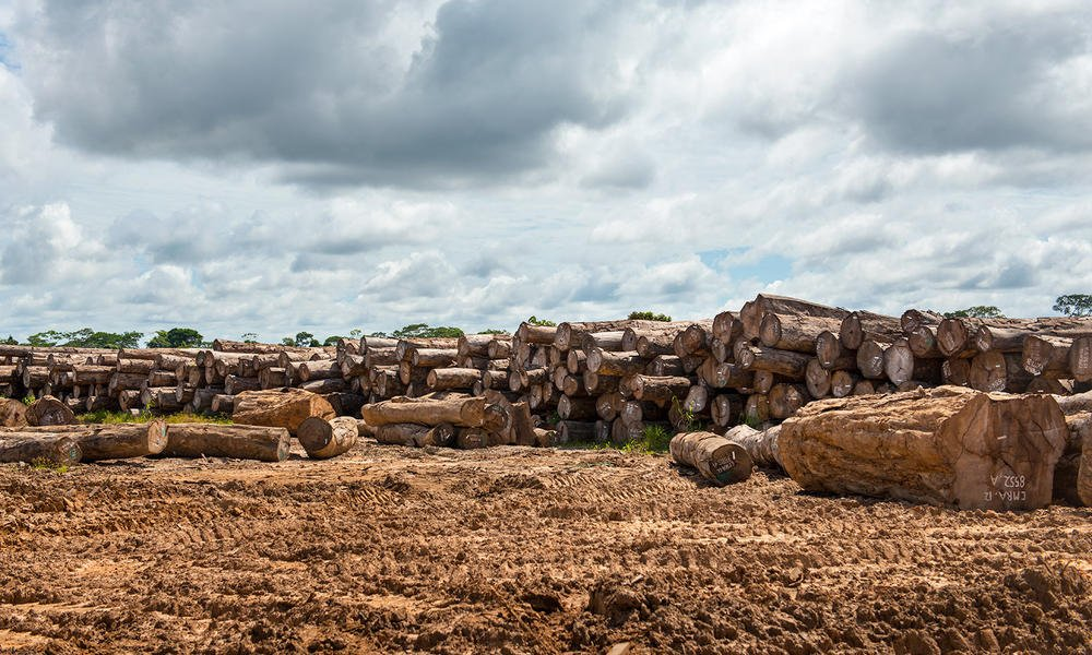 test Twitter Media - US bans timber imports from Peruvian company WCA after investigations by @Global_Witness & others exposed illegally-harvested timber in their supply chains https://t.co/quE3mgQsdlMore about how timber exporters are complicit in plundering Peru's Amazon https://t.co/TOqr7xi6Qb https://t.co/eICBzR0ScJ