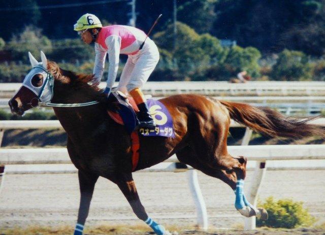 ~懐かしの高知の名馬~  ウォーターダグと西川敏弘騎手。 (2003年3月撮影)  今でも時々高知けいば実況の橋口アナウンサーから名前が出ることもある高知を代表する名馬。  高知県知事賞3回、二十四万石賞2回など高知で重賞をたくさん勝ちました。  #高知競馬 #名馬