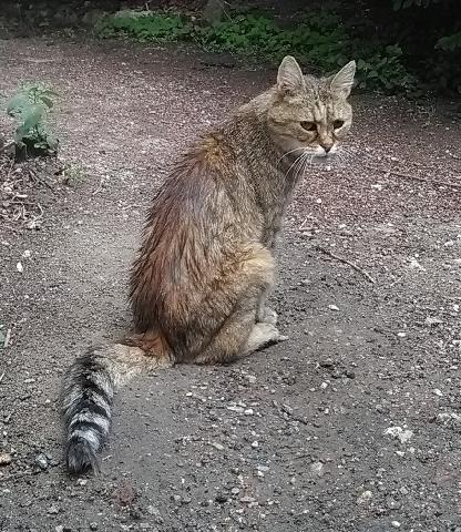 chat trouvé 59 sites de rencontre local