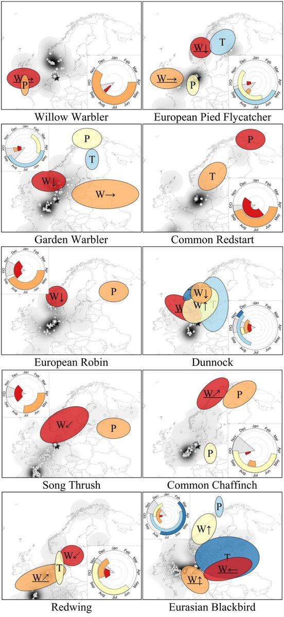 download the cauchy riemann complex: