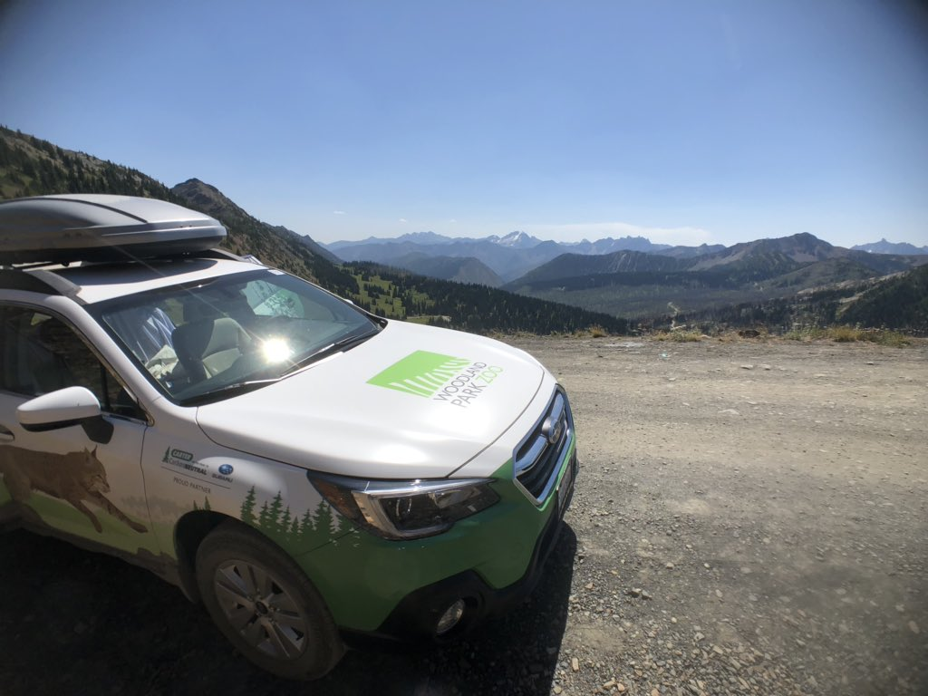 Our @CarterSubaru field vehicle took us safely to the highest drivable point in Washington – –Hart's Pass. Not a road for the faint at heart. An excellent place from which to base some backcountry #wolverine surveys! @woodlandparkzoo https://t.co/mWDmaN5LAz