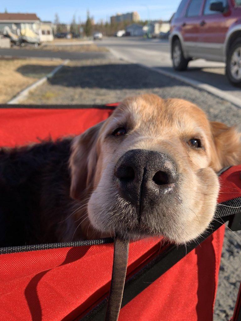 WeRateDogs™ (@dog_rates) | Twitter